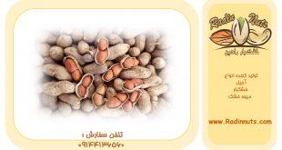 صادرات بادام زمینی در تناژهای بالا